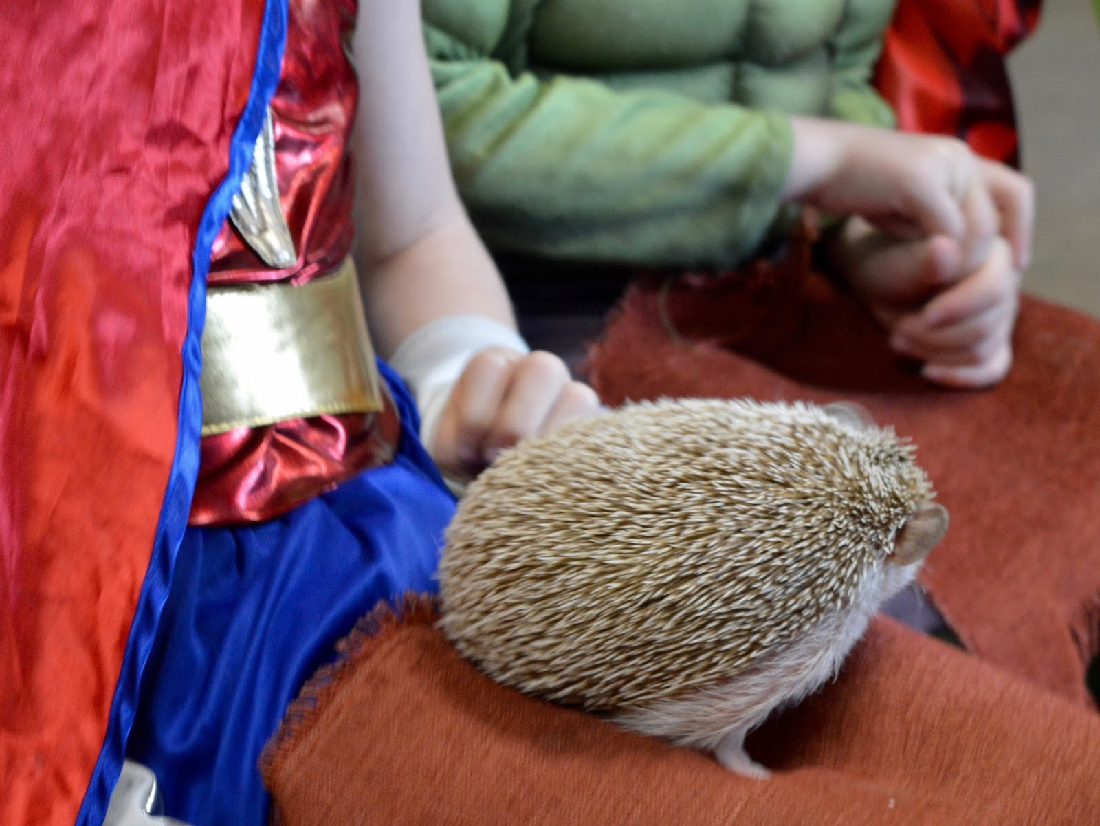 Birthday Parties at Whitehouse Farm in Northumberland | What to expect & review - meeting a pygmy hedgehog