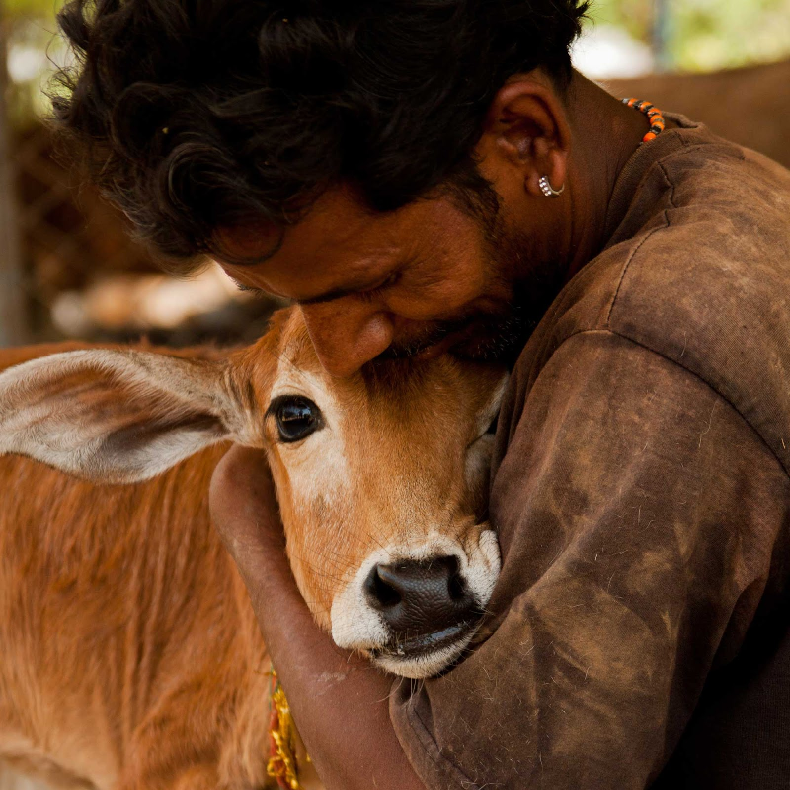 compassion for all living creatures is Fundamental Duty of Indian citizens