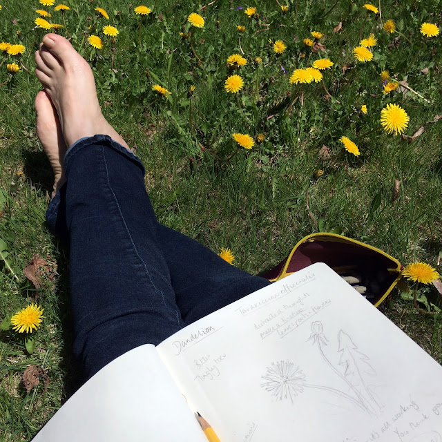 Sketchbook, Dandelion, Botanical Sketchbook, Artist, Gardener, Lisa Estabrook, Artist Interview, My Giant Strawberry