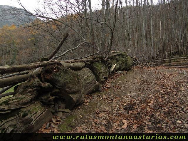 Pista bordeada por troncos de madera