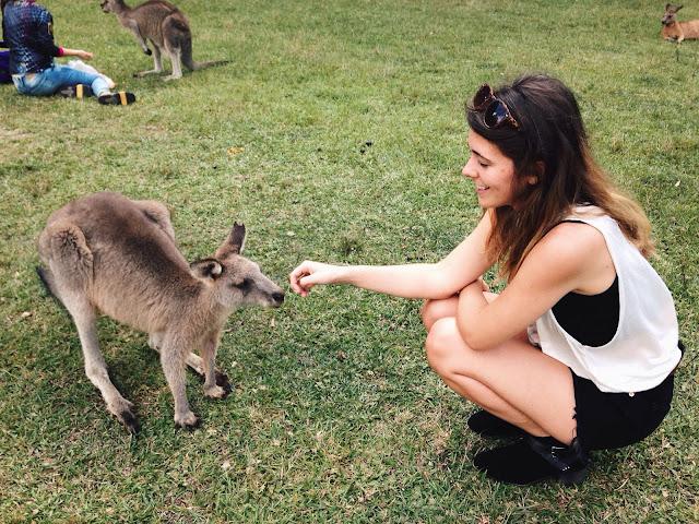 Kangaroo petting in Macquarie Park