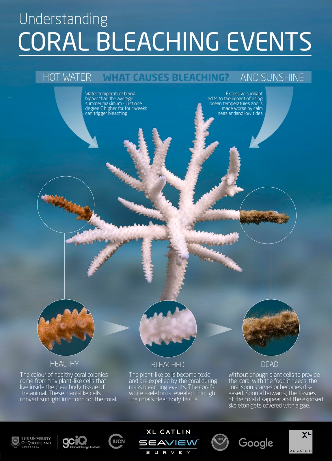 The Importance Of Coral Reefs In