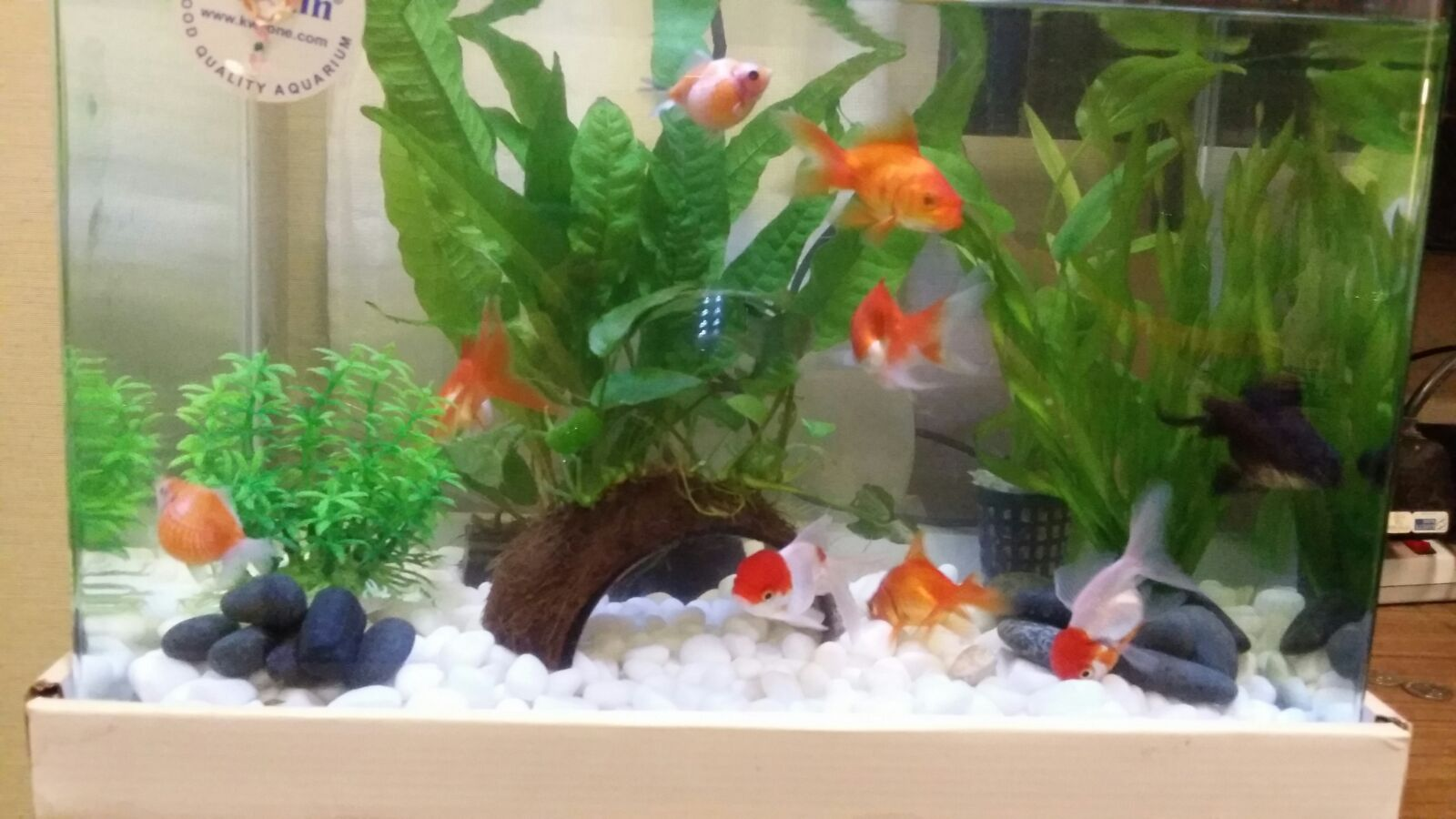 Fish tank for feng shui - In Feng Shui Numbers Are Always Important And It S Not Different When It Comes To The Popular Feng Shui Tool Of Fish You Can Use Fish Either In A Koi Pond