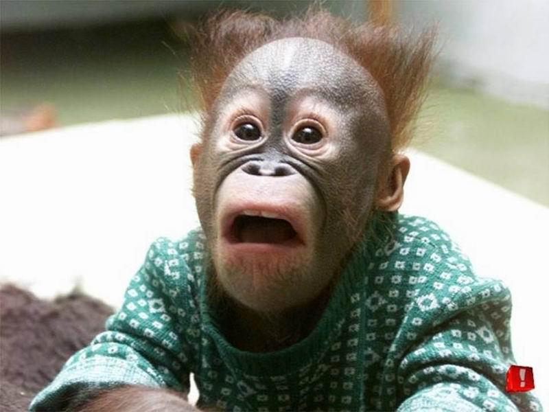 Monyet Patah Hati Mak  amp Anak Gulppp