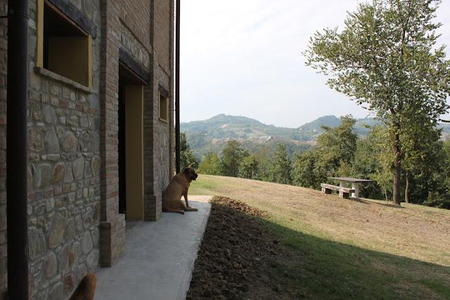 Bologna, Valsamoggia - Viinitarhoja ja koirahommia 34