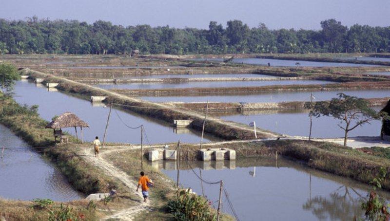 Shrimp Farming Methods and Basic Knowledge - Mackerel Fish