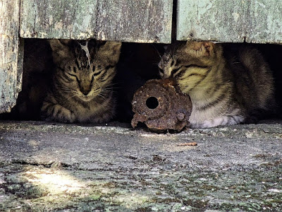 Feral Cats - What to Do If They Live Near You