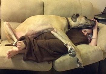 tidur dengan anjing 16 Fakta Aneh Tubuh Manusia Terbaru