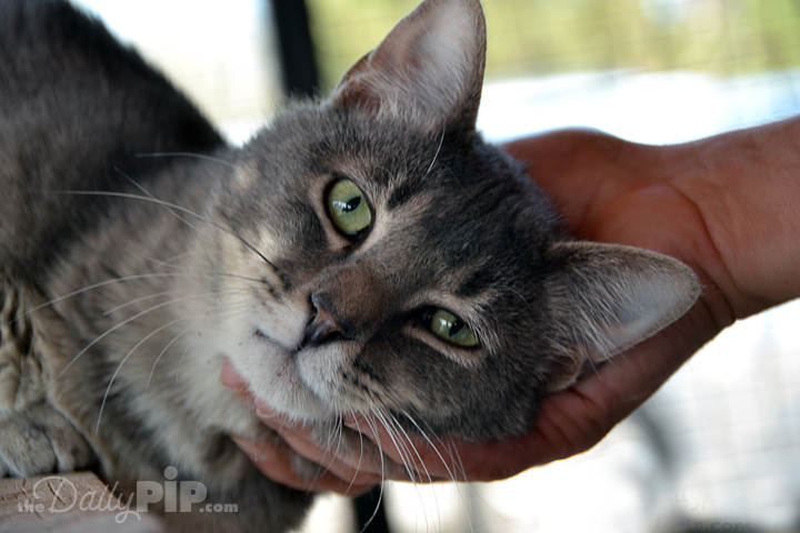 Why you should adopt a shelter cat today