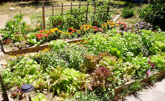 Raised Bed Vegetable Gardening – An Interesting Idea - Floriculture Care - House Plants