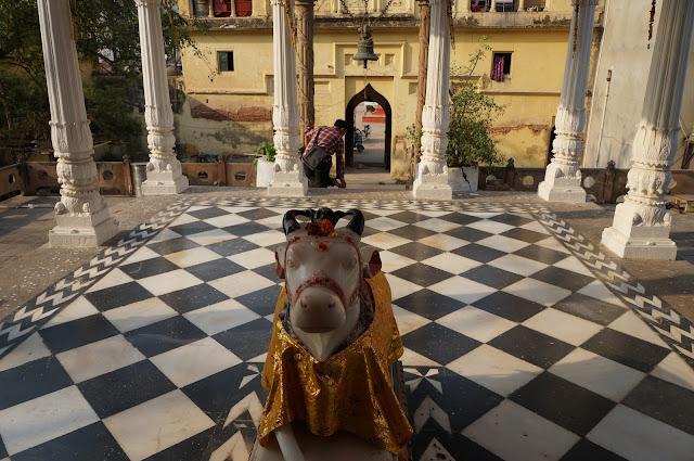 Bagian dalam Kuil Hindu memuja sapi di Varanasi