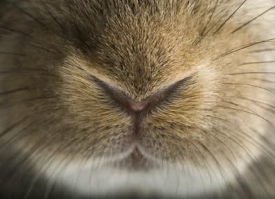 signs of rabbit illness