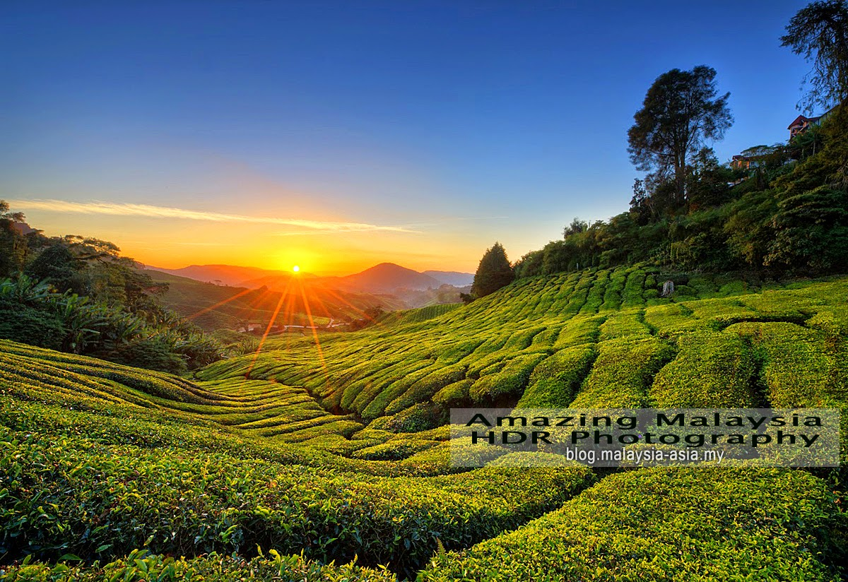 Cameron Highlands Malaysia HDR Photo