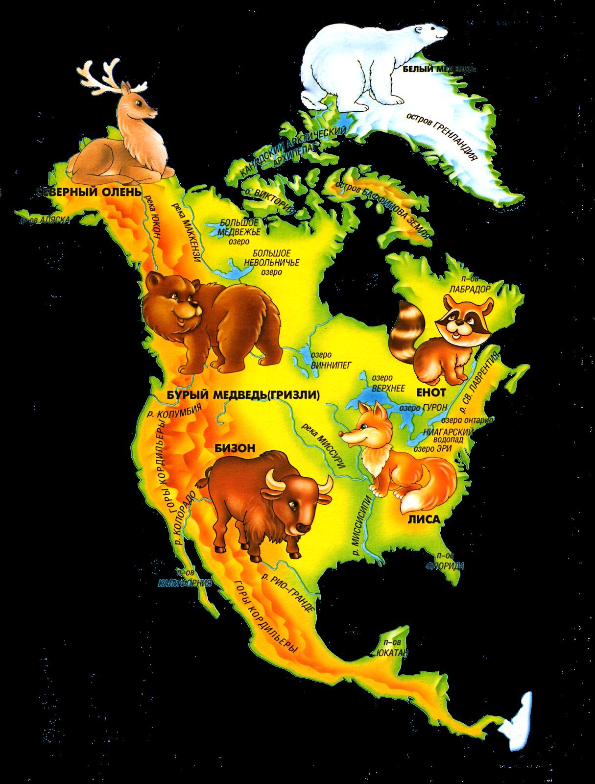 Северная америка карта картинки для детей