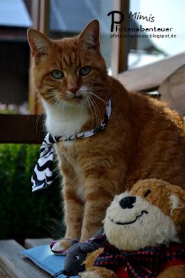 Katze Mimi mit einer Krawatte