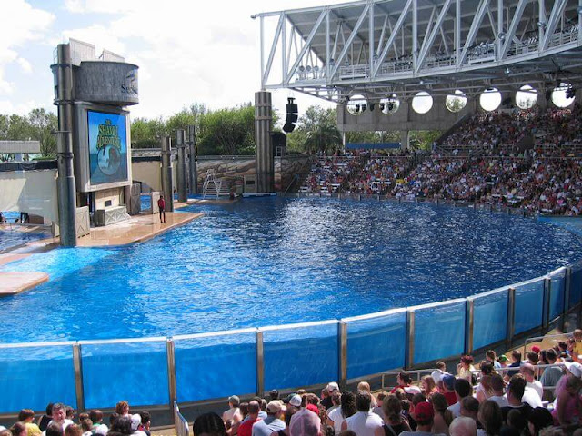 espectáculo de orcas en Sea World de Orlando piscina grande