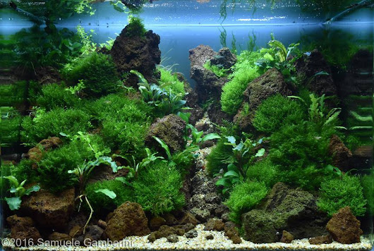 Kontes AGA 2016, Aquatic Garden, 28L ~ 60L September Gambar Aquascape