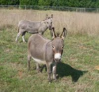I'M A DONKEY'S UNCLE!       JOE & MR. GUN SMOKE FROM MARG'S ANIMALS