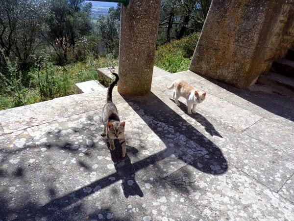 sanctuary cats