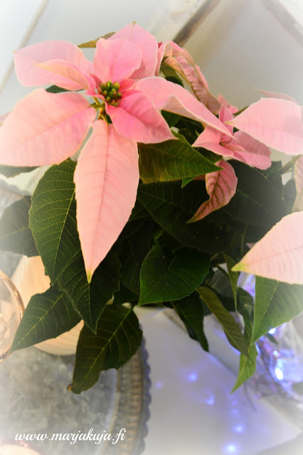 princettia pinkki joulutahti