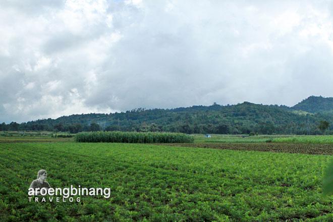 ladang kacang tanah keramik pulutan minahasa sulawesi utara