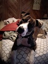 Brutus: Animal Friends Home to Home Adoption Program