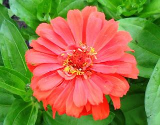 Мои скромные цветы, 19 июля