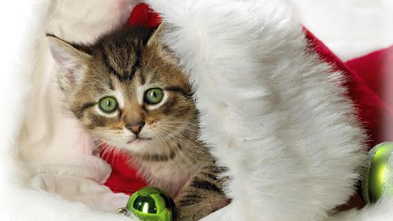 download besplatne Božićne pozadine za desktop 2560x1440 čestitke blagdani Merry Christmas mačka