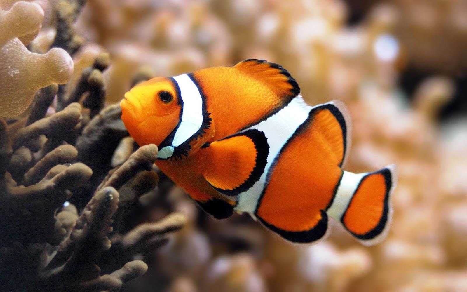 Cute Penguin Mac Wallpaper Orange Tropical Fish Wallpaper