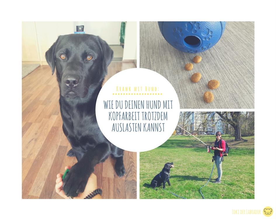 Fotocollage Krank mit Hund Auslastung Labrador