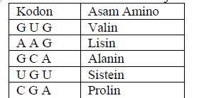 Kodon dan asam amino