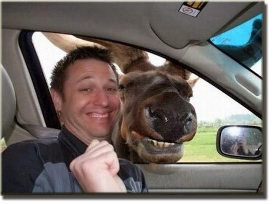 Selfie Animal