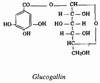 Thành phần hóa học Đại Hoàng - Rheum - Nguyên liệu làm thuốc Nhuận Tràng và Tẩy