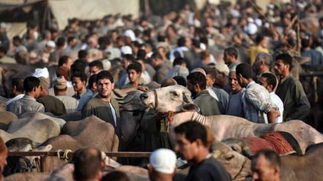 Hari Ini di Arab Saudi Sudah Idul Adha, Bagaimana Puasa Arafah di Indonesia