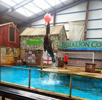 Knowsley Park Sea Lion jumping out of the water