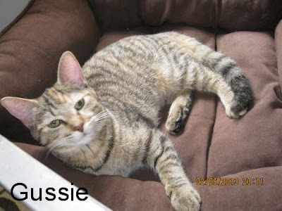 brown tabby cat laying down