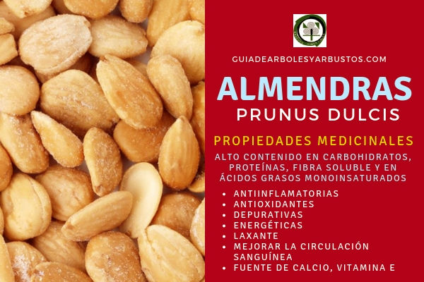 Las almendras tiene propiedades antiinflamatorias, antioxidantes, depurativas, energéticas entre muchas otras