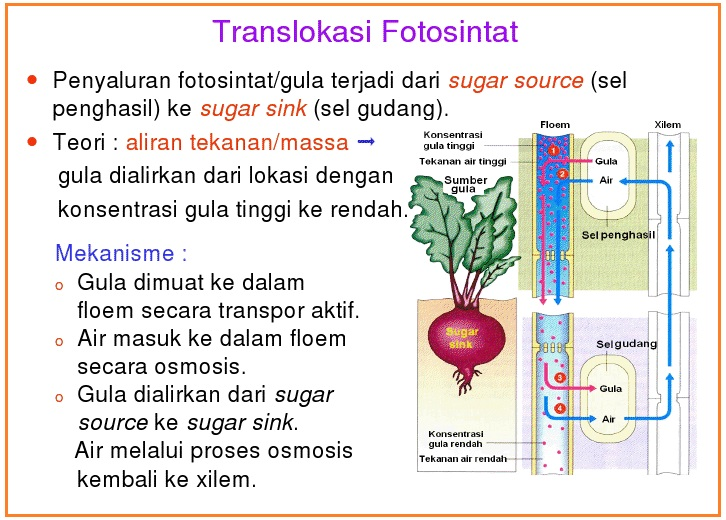 Biologi gonzaga transportasi tumbuhan agar lebih lagi baca ini ccuart Gallery