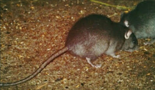 lassa fever killed three in Benue