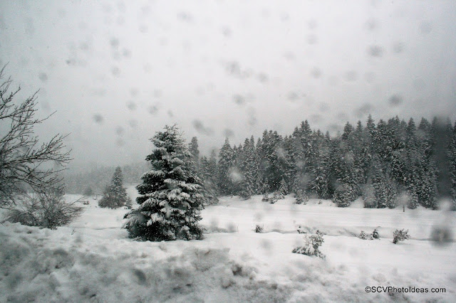 Winter snow scene with fir-tree
