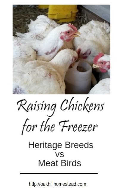 It's your choice, raising meat chickens or heritage breeds for the freezer. Here's my comparison of the two.