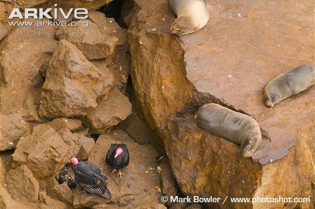 interactions between marine mammals and birds