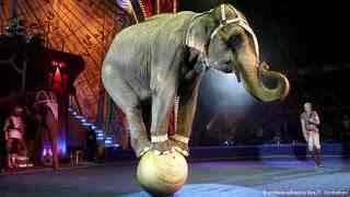 एक शिक्षाप्रद कहानी-सर्कस का हाथी | Inspirational Story In Hindi | Gyansagar ( ज्ञानसागर )