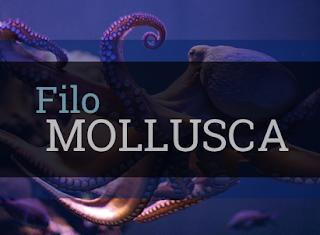 moluscos resumo características gerais biologia exemplos classificação