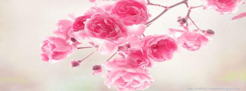Belle Photos Couverture Fleurs Roses Idee D Image De Fleur