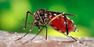 Zika Virüsü Nedir? Belirtileri Nelerdir? Tedavi Yöntemi