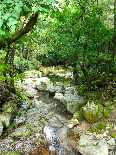 Forest stream by the path to Cheongpyeongsa temple, outside Chuncheon, South Korea