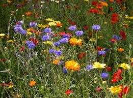 Como hacer un jardìn de flores