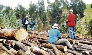 Indigenas, Peru, Deforestacion, Amazonia, Bosques,