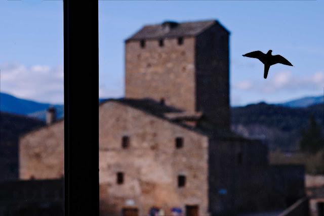 Pájaro en la ventana